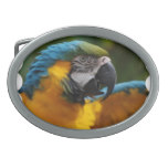 Ruffled Blue and Gold Macaw Oval Belt Buckle