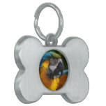Ruffled Blue and Gold Macaw Pet Name Tag