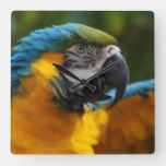 Ruffled Blue and Gold Macaw Square Wall Clock