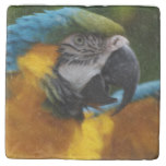 Ruffled Blue and Gold Macaw Stone Coaster