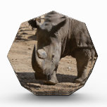 Rutting Rhino Award