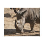 Rutting Rhino Canvas Print
