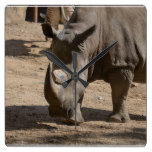 Rutting Rhino Square Wall Clock