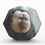 Saki Monkey Acrylic Award