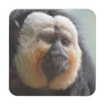 Saki Monkey Beverage Coaster
