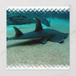 Sand Shark Invitations