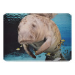 Sea Cow Swimming Card