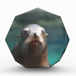 Sea Lion with Whiskers Acrylic Award