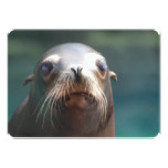 Sea Lion with Whiskers Card