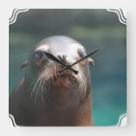 Sea Lion with Whiskers Square Wall Clock