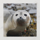 Seal Pup Invitations