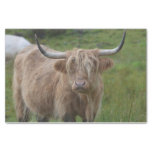 Shaggy Blonde Highland Cow Tissue Paper