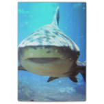 shark-5.jpg post-it® notes