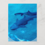 Shark Pair Postcard
