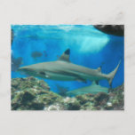 Shark with Reef Postcard