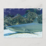 Sharks in Coral Reef Postcard