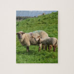 Sheep Family Jigsaw Puzzle
