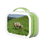 Sheep Family Lunch Box