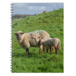 Sheep Family Notebook