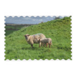 Sheep Family Placemat