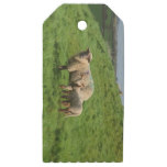 Sheep Family Wooden Gift Tags