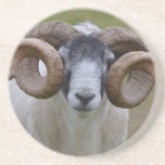 Sheep Sandstone Coaster
