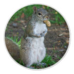 Silly Squirrel Ceramic Knob