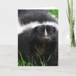 Skunk Photo Greeting Card