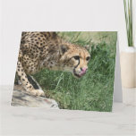 Sleek Cheetah Cat on a Rock Card