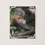 Sleeping Red Panda puzzle
