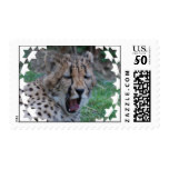 Sleepy Cheetah Cub Postage