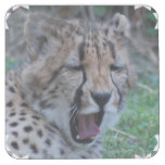 Sleepy Cheetah Cub Square Paper Coaster