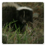 Smelly Skunk Poster