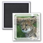 Spotted Cheetah Square Magnet