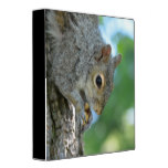 Squirrel Hanging in A Tree 3 Ring Binder