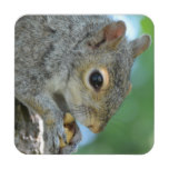 Squirrel Hanging in A Tree Beverage Coaster