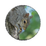 Squirrel Hanging in A Tree Candy Tin
