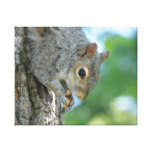 Squirrel Hanging in A Tree Canvas Print