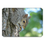 Squirrel Hanging in A Tree Card