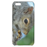 Squirrel Hanging in A Tree Case For iPhone 5C