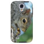 Squirrel Hanging in A Tree Galaxy S4 Case