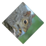 Squirrel Hanging in A Tree Graduation Cap Topper