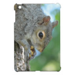 Squirrel Hanging in A Tree iPad Mini Cases