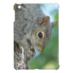 Squirrel Hanging in A Tree iPad Mini Cover