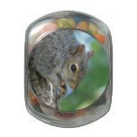 Squirrel Hanging in A Tree Jelly Belly Candy Jar