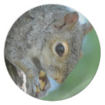 Squirrel Hanging in A Tree Melamine Plate