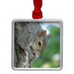 Squirrel Hanging in A Tree Metal Ornament
