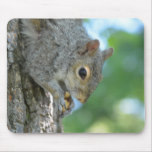 Squirrel Hanging in A Tree Mouse Pad