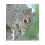 Squirrel Hanging in A Tree Notepad