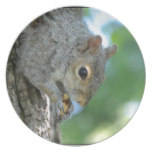 Squirrel Hanging in A Tree Plate